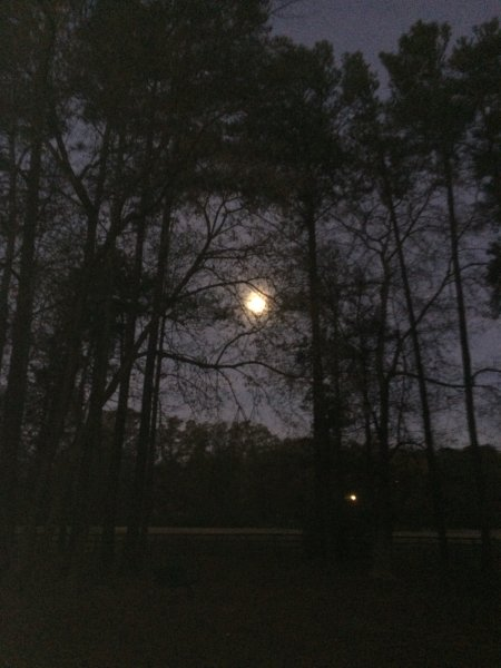 Full moon during dawn at Loch Haven Dog Park,  moon, pine trees, Hoover, Alabama